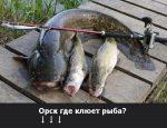 Прогноз клева новотроицк – Прогноз клёва рыбы в городе Новотроицк