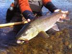 Воблеры для ловли тайменя – Снасти для ловли тайменя — Охота и рыбалка в России и за рубежом