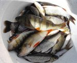 Малинино липецкая область рыбалка – Платный пруд в Малинино Липецкая область