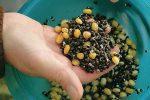 Прикормка на сазана своими руками рецепты – Лучшая прикормка для сазана своими руками летом и зимой