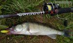 Судака где и ловить судака – Ловля судака на спиннинг, проводки и снасть