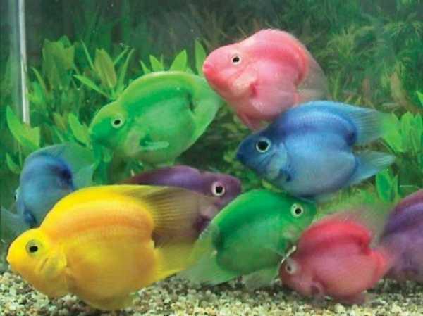 Какая у золотой рыбки память – Какая память у рыбы?